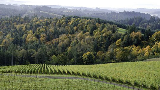 Fairsing Vineyard