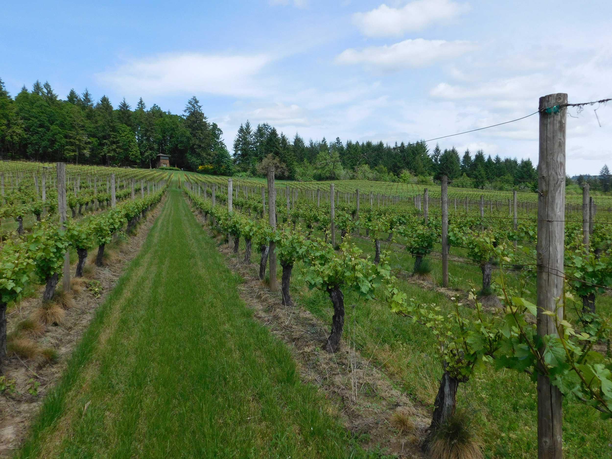 Boutique Oregon Pinot Noir & Chardonnay