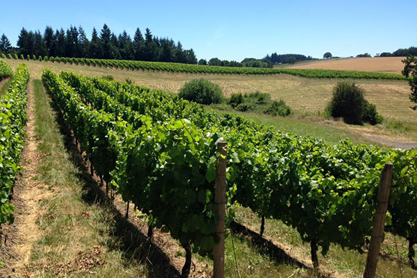 Monks Gate Vineyard