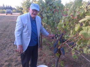 IMG-20140921-dad-picking-grapes-lundeen-poverty-bend-small